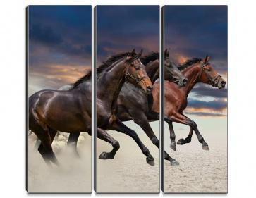 THE POWER OF STALLIONS
